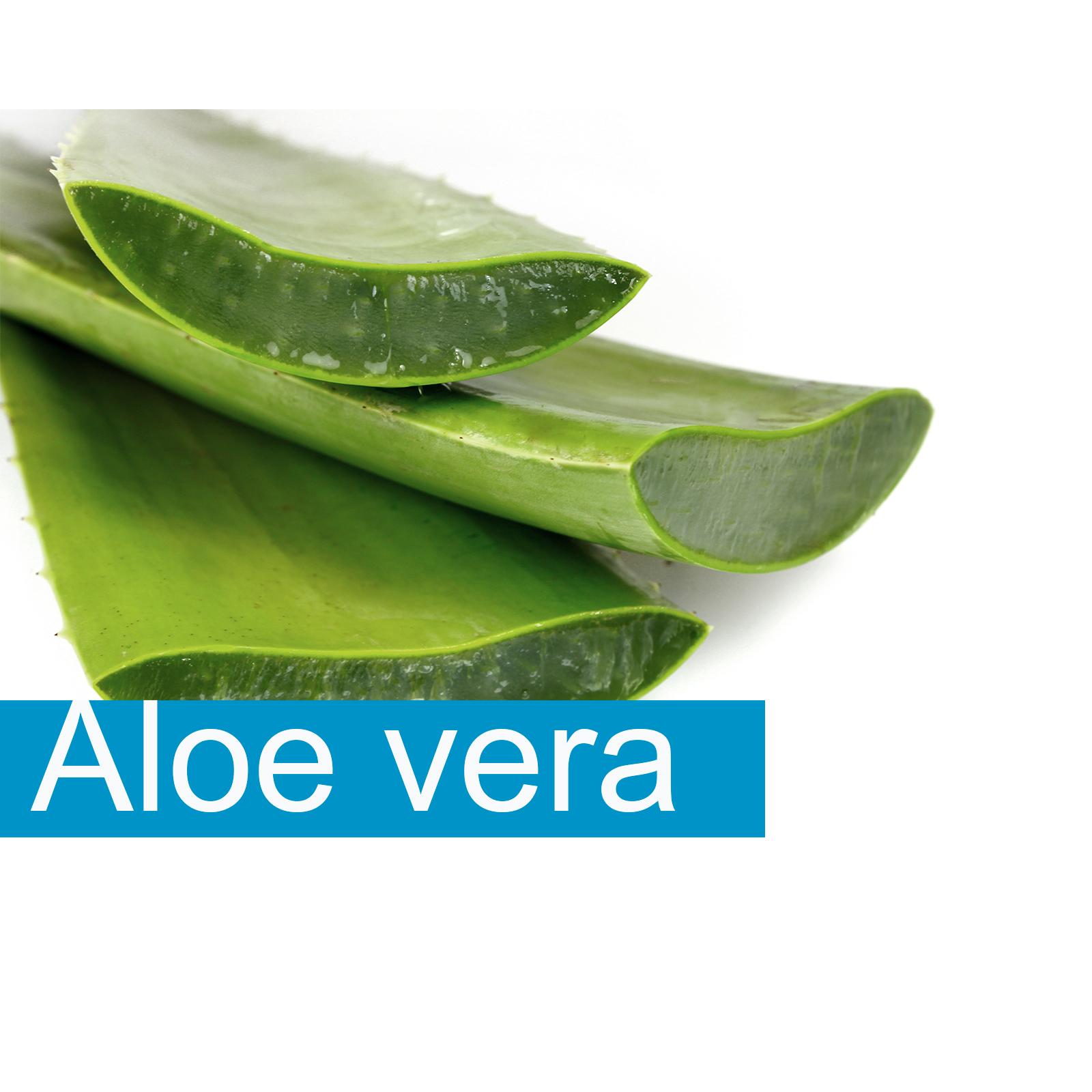 Propiedades del aloe vera aloe barbadensis z bila - Cuidados del aloe vera ...