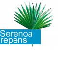 serenoa nueva 120x120 - Propiedades del Serenoa Repens, palma enana americana, sabal o palmito salvaje
