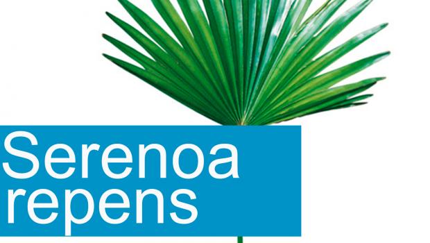 serenoa nueva 620x350 - Propiedades del Serenoa Repens, palma enana americana, sabal o palmito salvaje