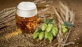cebada y lupulo 620x350 290x166 - Beneficios de la cerveza para el pelo