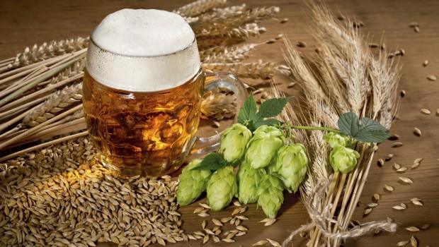 cebada y lupulo 620x350 - Beneficios de la cerveza para el pelo