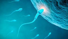 espermatozoide mqs5 290x166 - 10 curiosidades sobre los espermatozoides y el semen