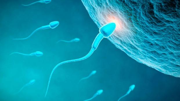 espermatozoide mqs5