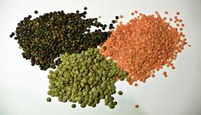 lentejas tipos 290x166 - El poder de las legumbres: un plato indispensable