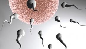 como quedarse embarazada