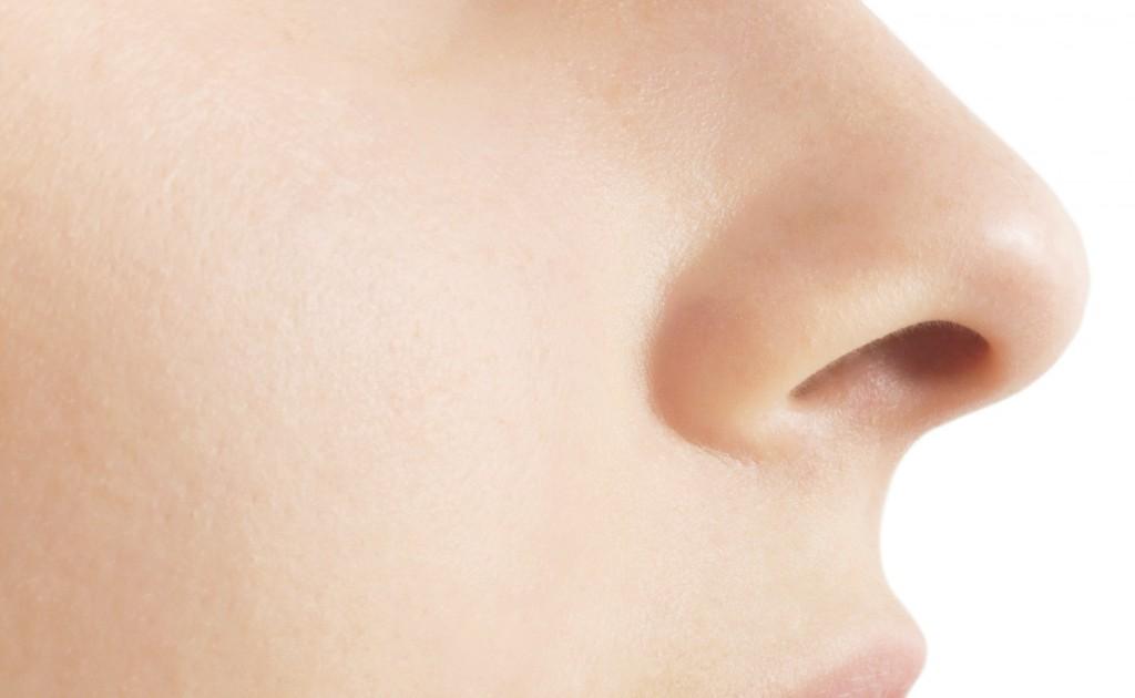 olfato órgano vomeronasal