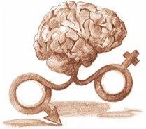 cerebro Sexo