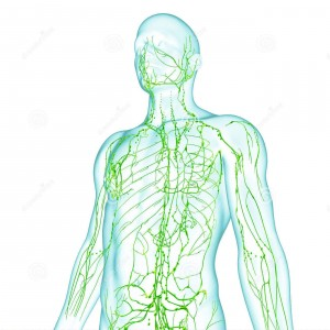 sistema-linfático-masculino-36217226