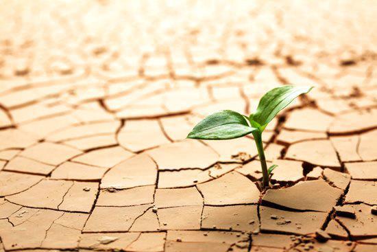 1 foto resiliencia - Mindfulness o el arte de entrenar resiliencia