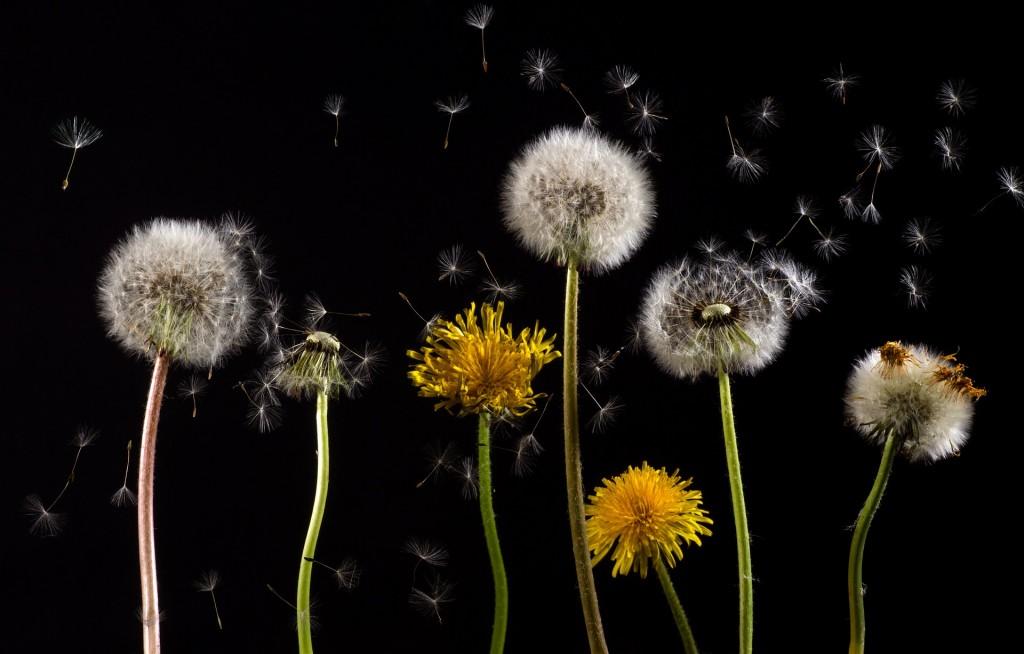 alergia-primaveral-polen