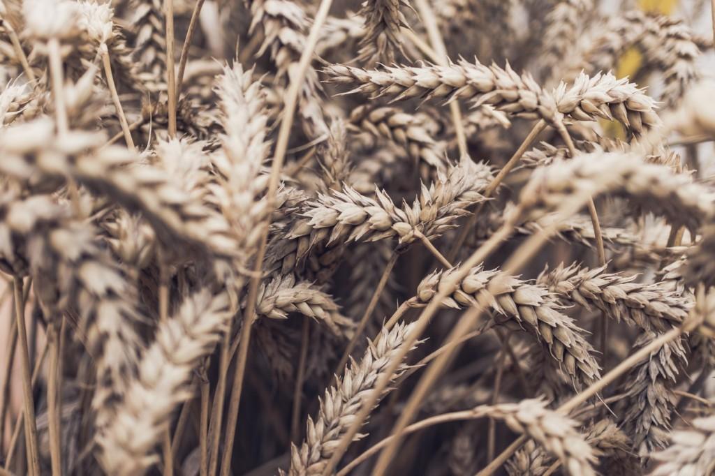 ¿La pasta engorda? Sémola de trigo